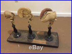 1910's Plastinated Vintage German Human Brain Model Anatomy Antique