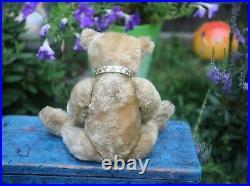 ANTIQUE GERMAN STEIFF TEDDY BEAR c1908 FF EAR BUTTON 13 INCHES OF ADORABLE